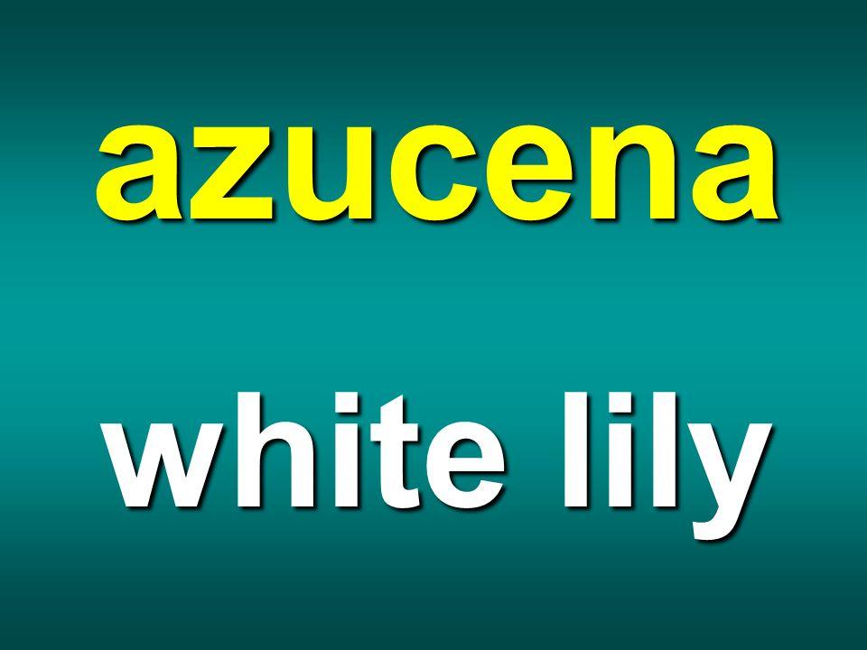 azucena white lily