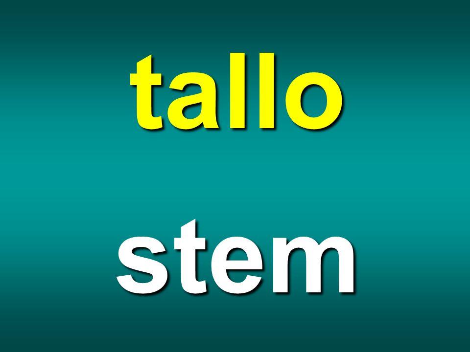 tallo stem