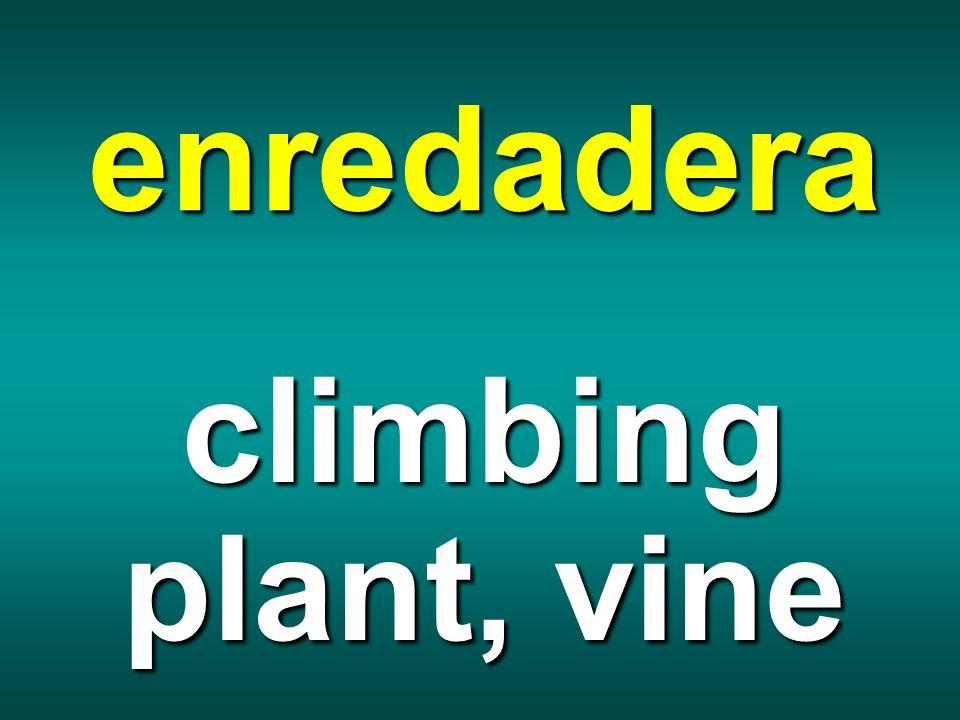 enredadera climbing plant, vine