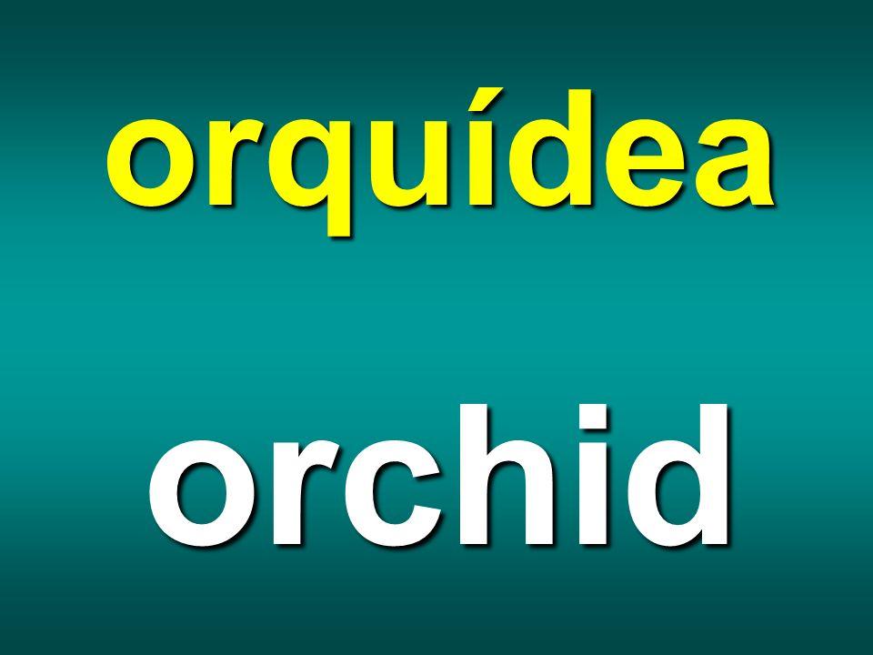 orquídea orchid
