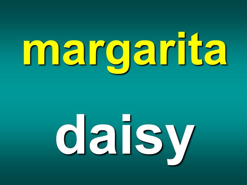 margarita daisy