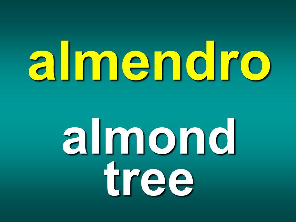 almendro almond tree