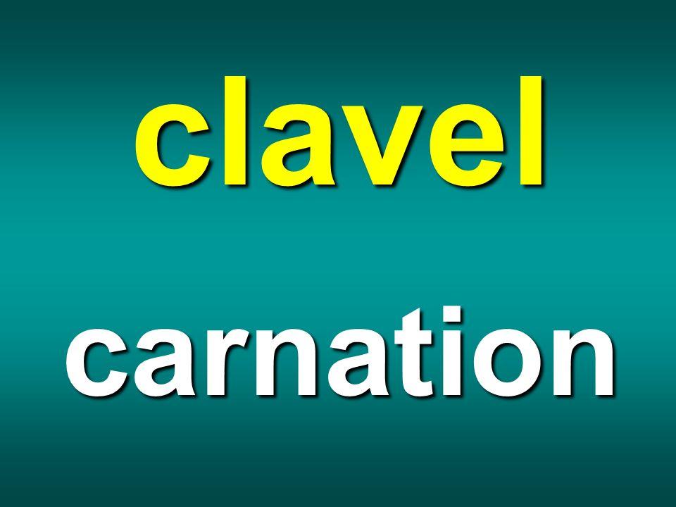 clavel carnation