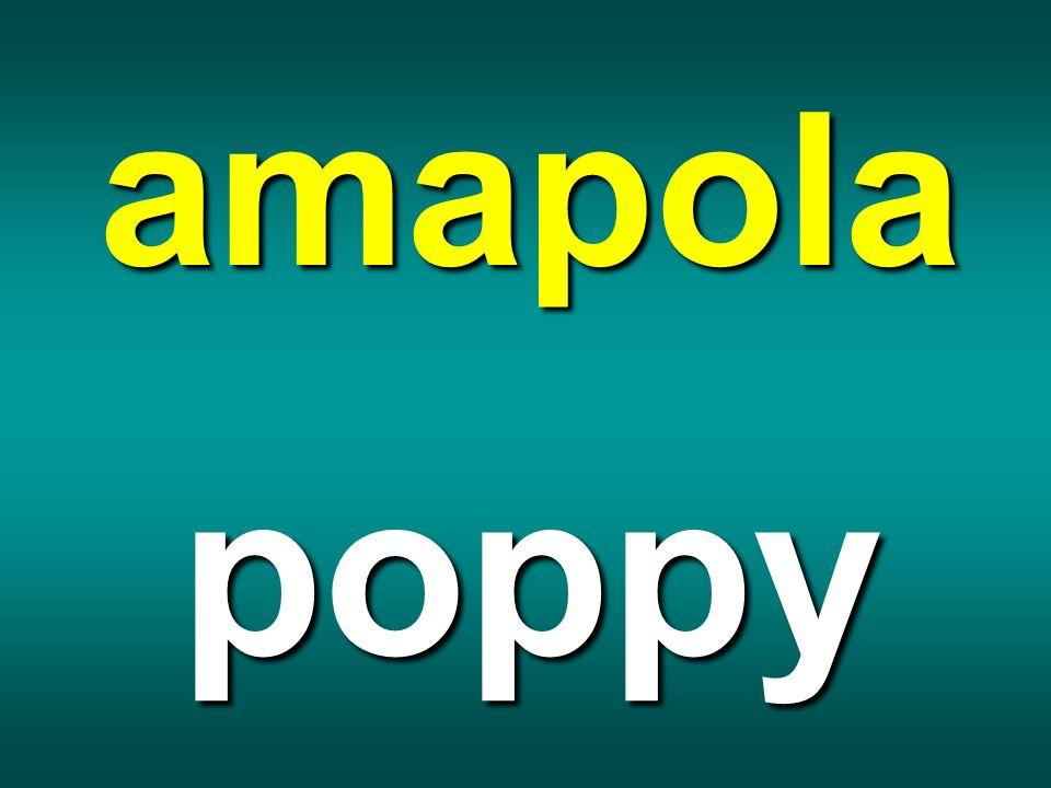 amapola poppy