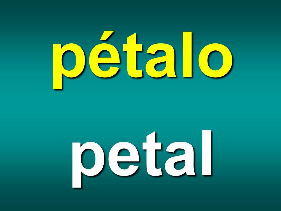 pétalo petal