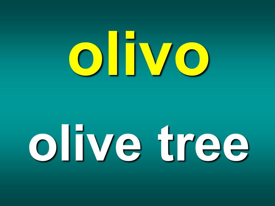 olivo olive tree