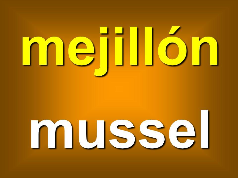 mejillón mussel