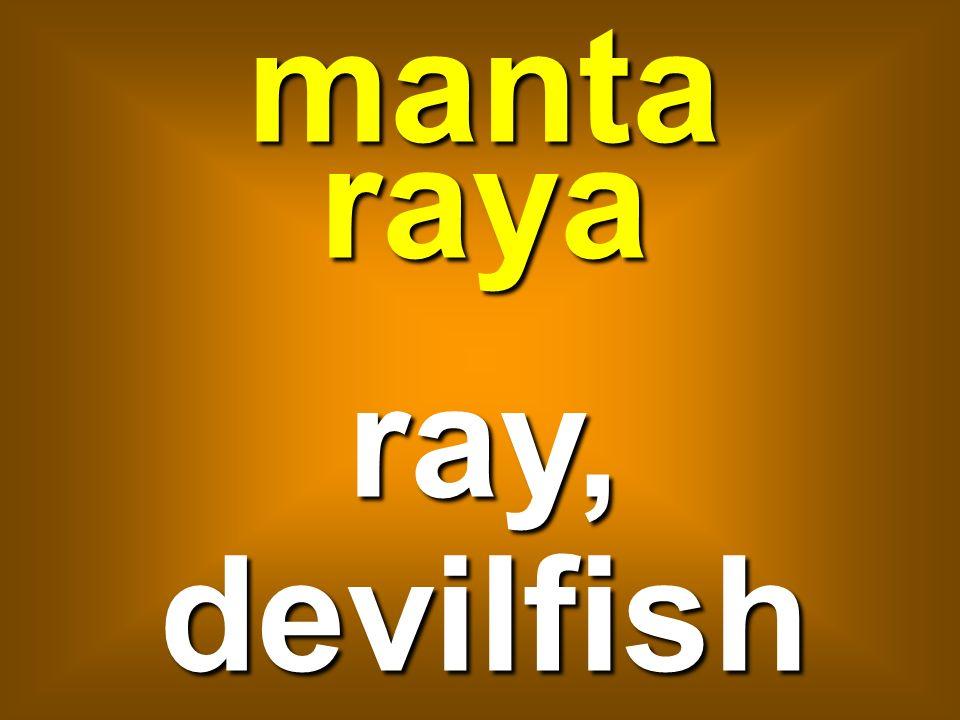 manta raya ray, devilfish