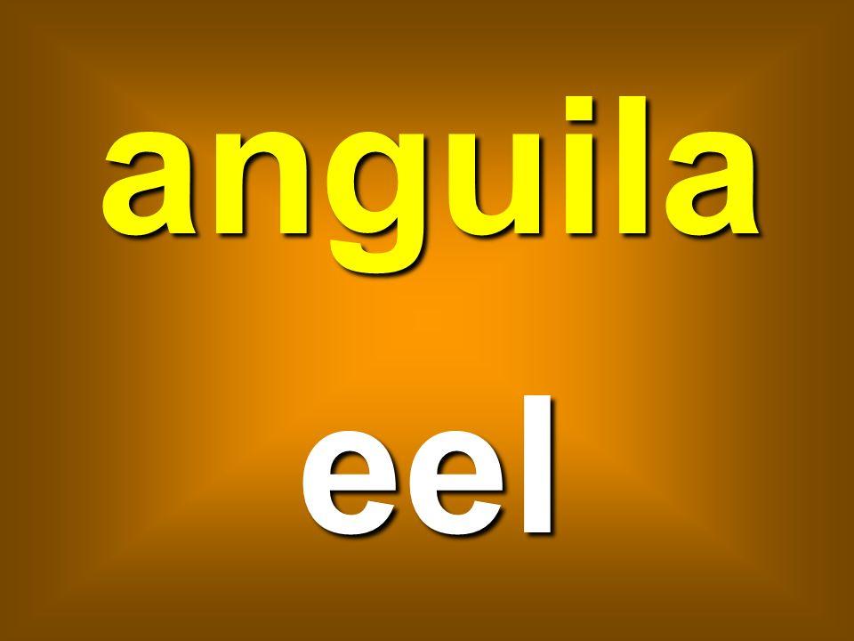 anguila eel