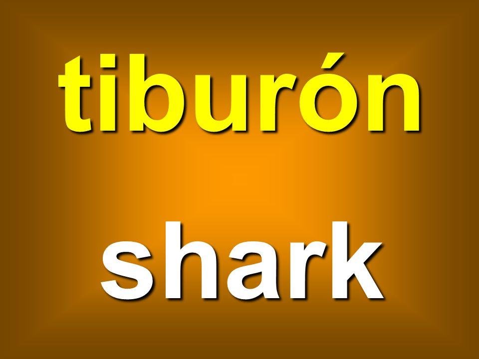 tiburón shark
