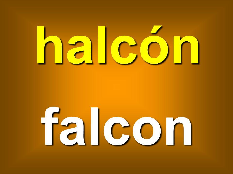 halcón falcon