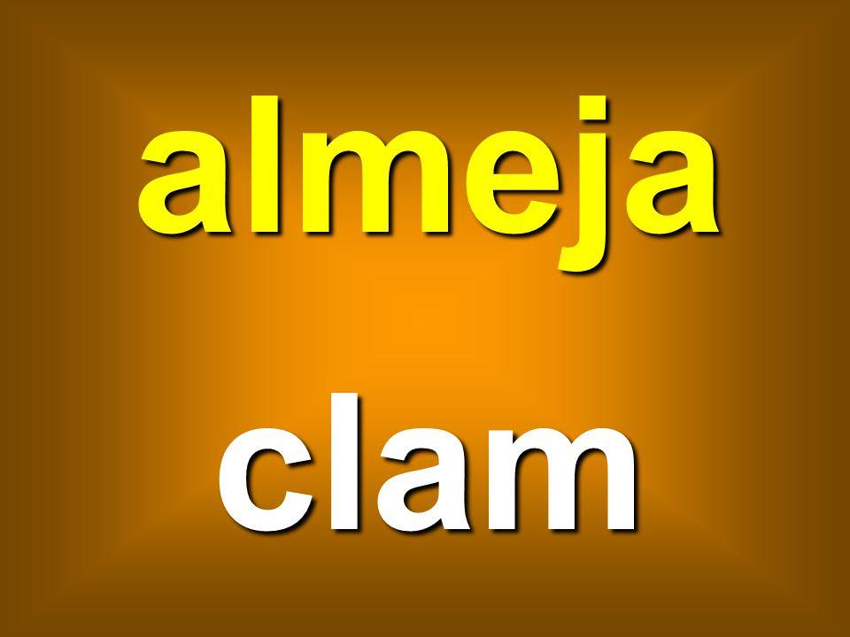 almeja clam