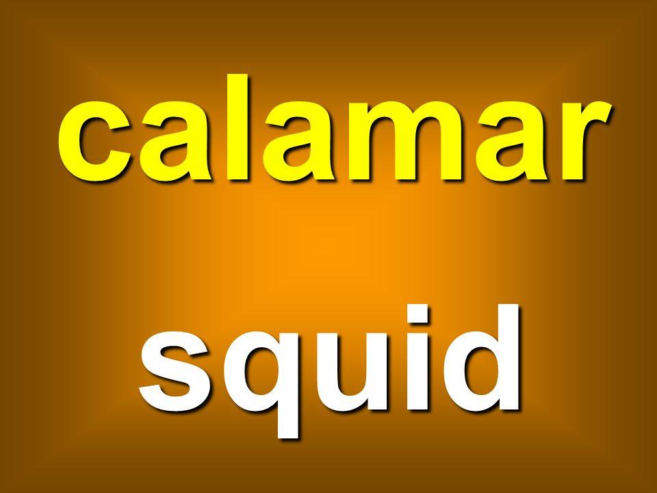 calamar squid