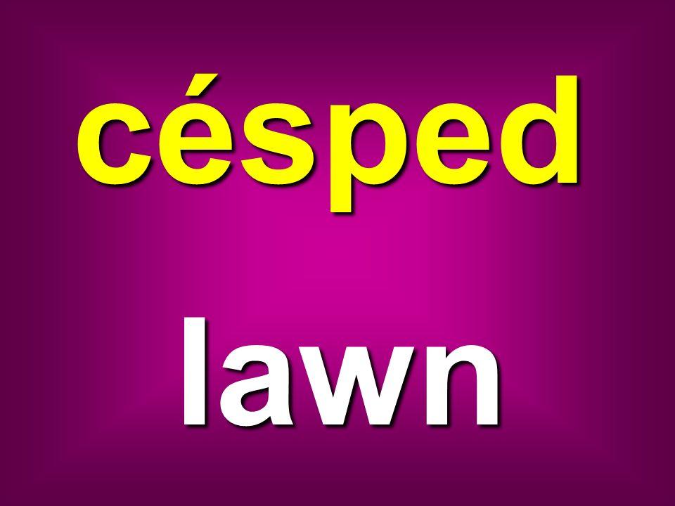 césped lawn
