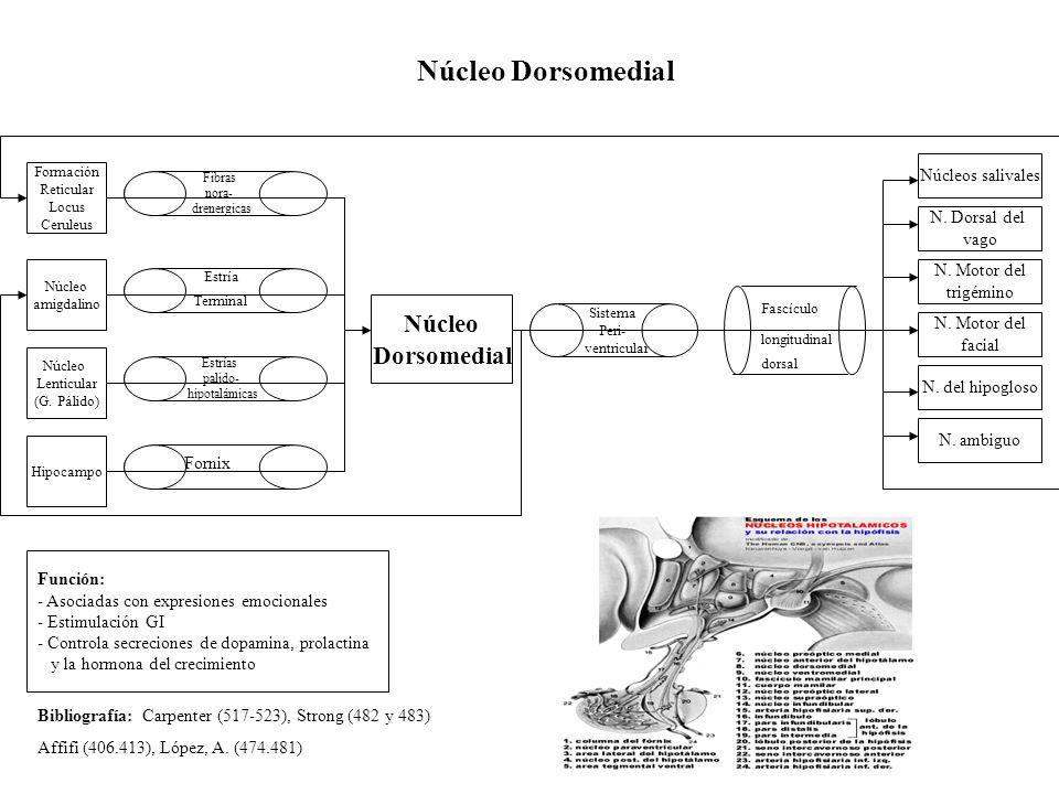 Núcleo Dorsomedial Núcleo Dorsomedial Función: - Asociadas con expresiones emocionales - Estimulación GI - Controla secreciones de dopamina, prolactin