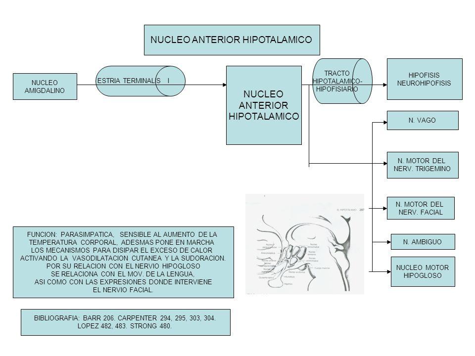 NUCLEO ANTERIOR HIPOTALAMICO NUCLEO AMIGDALINO ESTRIA TERMINALIS I NUCLEO ANTERIOR HIPOTALAMICO HIPOFISIS NEUROHIPOFISIS N. VAGO N. MOTOR DEL NERV. TR