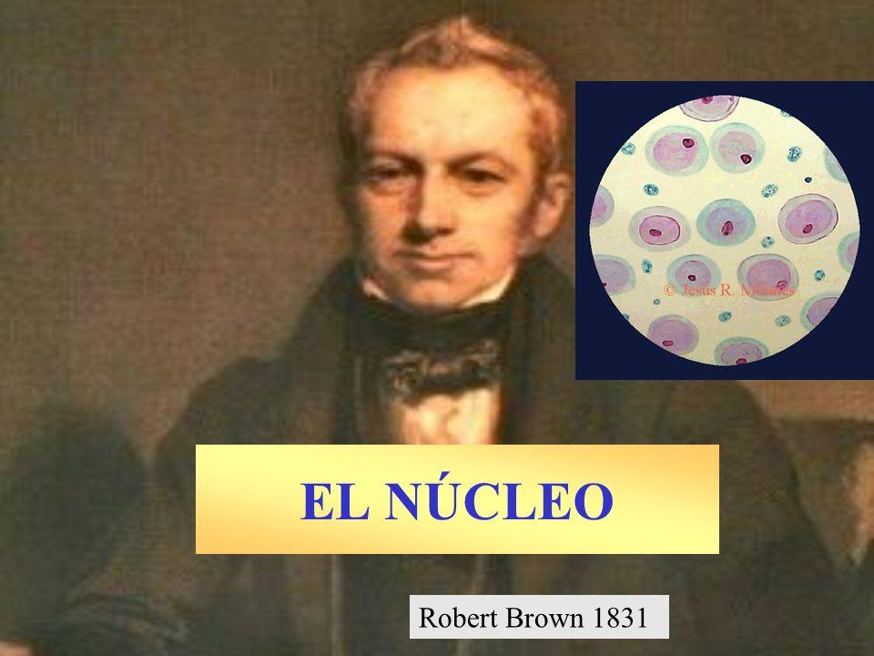 EL NÚCLEO Robert Brown 1831