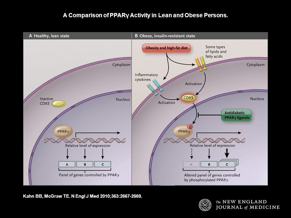 A Comparison of PPARγ Activity in Lean and Obese Persons. Kahn BB, McGraw TE. N Engl J Med 2010;363:2667-2669.