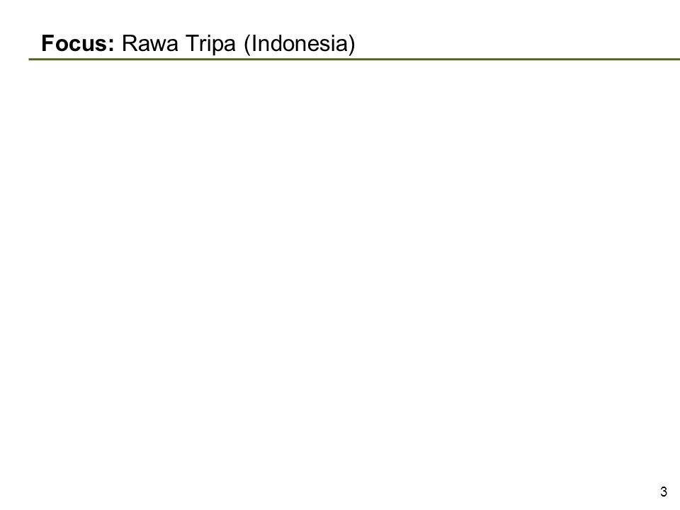 Focus: Rawa Tripa (Indonesia) 3