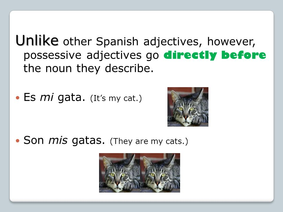 Unlike Unlike other Spanish adjectives, however, possessive adjectives go directly before the noun they describe. Es mi gata. (Its my cat.) Son mis ga