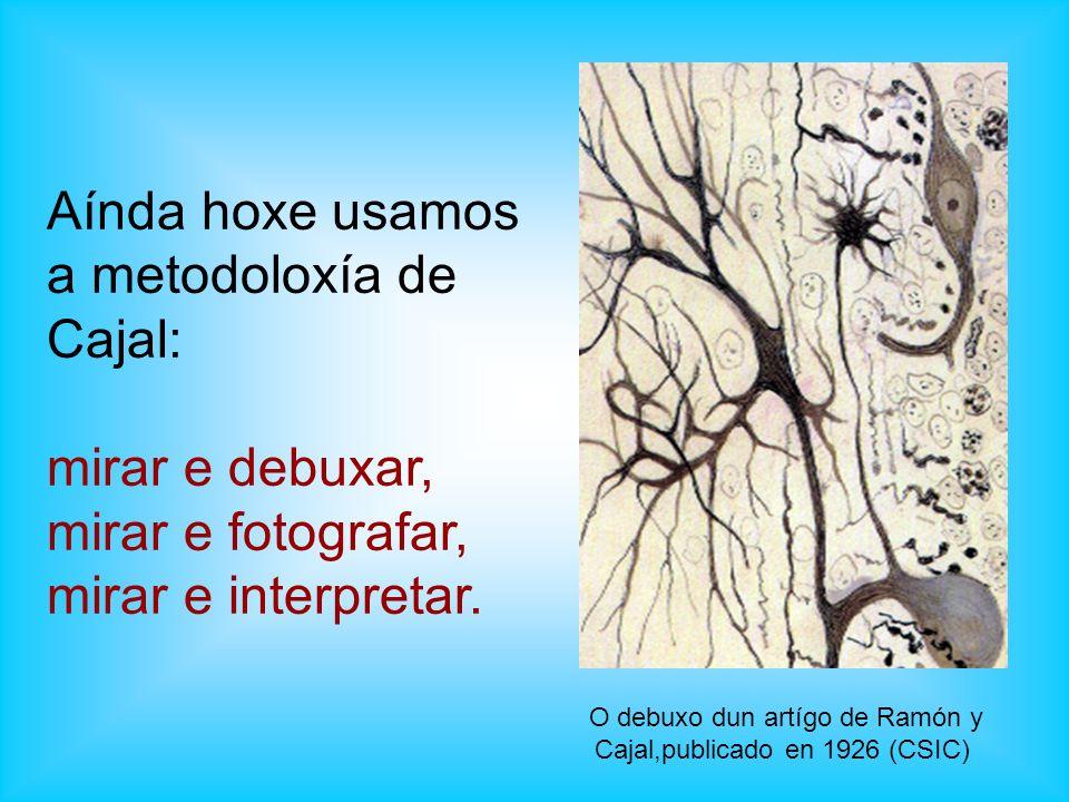 Aínda hoxe usamos a metodoloxía de Cajal: mirar e debuxar, mirar e fotografar, mirar e interpretar. O debuxo dun artígo de Ramón y Cajal,publicado en