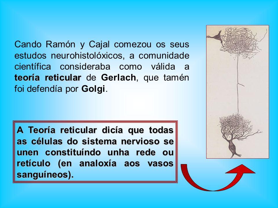 teoría reticular Cando Ramón y Cajal comezou os seus estudos neurohistolóxicos, a comunidade científica consideraba como válida a teoría reticular de