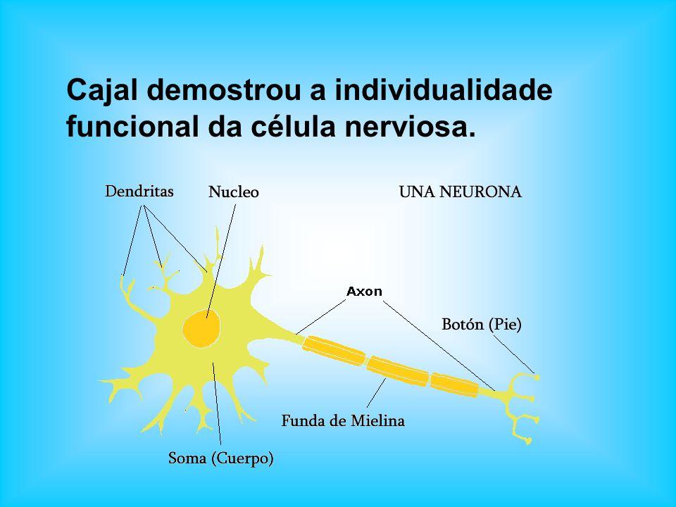 Cajal demostrou a individualidade funcional da célula nerviosa.
