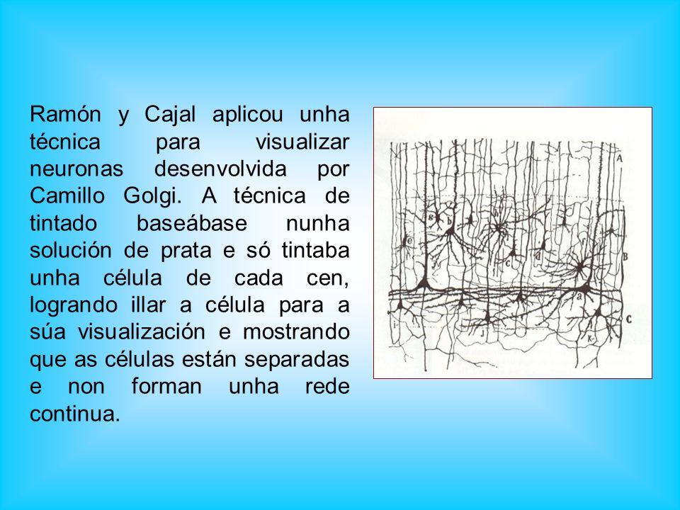 Ramón y Cajal aplicou unha técnica para visualizar neuronas desenvolvida por Camillo Golgi. A técnica de tintado baseábase nunha solución de prata e s