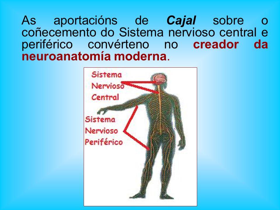 As aportacións de Cajal sobre o coñecemento do Sistema nervioso central e periférico convérteno no creador da neuroanatomía moderna.
