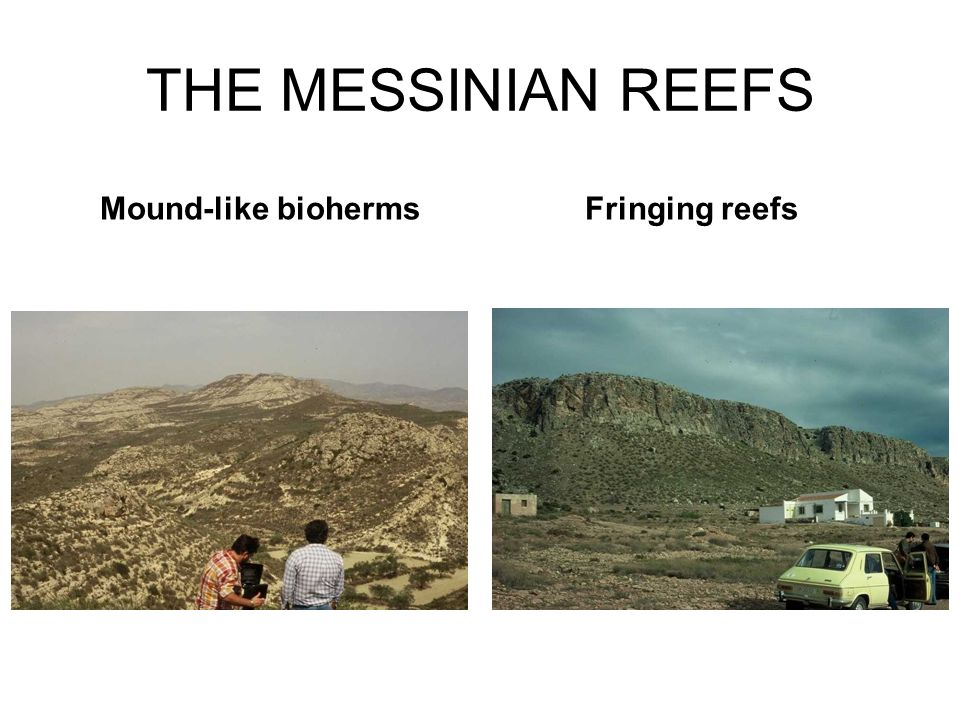 THE MESSINIAN REEFS Mound-like bioherms Fringing reefs