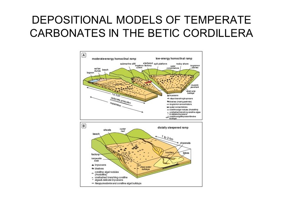 DEPOSITIONAL MODELS OF TEMPERATE CARBONATES IN THE BETIC CORDILLERA