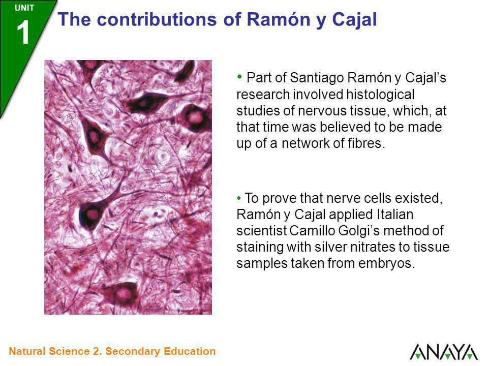Part of Santiago Ramón y Cajals research involved histological studies of nervous tissue, which, at that time was believed to be made up of a network