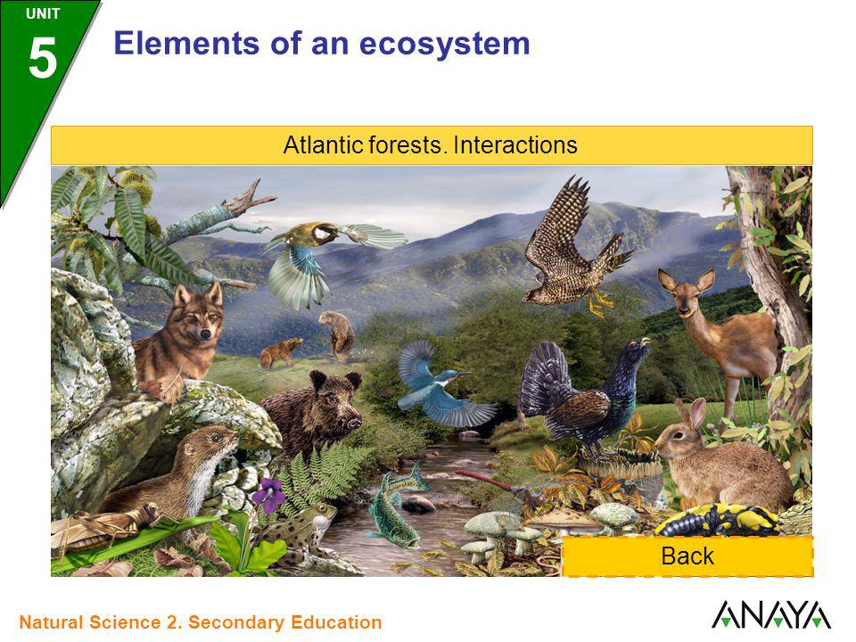 Atlantic forests. Interactions Back Elements of an ecosystem UNIT 5 Natural Science 2. Secondary Education