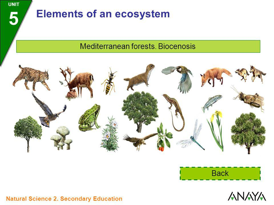 Mediterranean forests. Biocenosis Back Elements of an ecosystem UNIT 5 Natural Science 2. Secondary Education