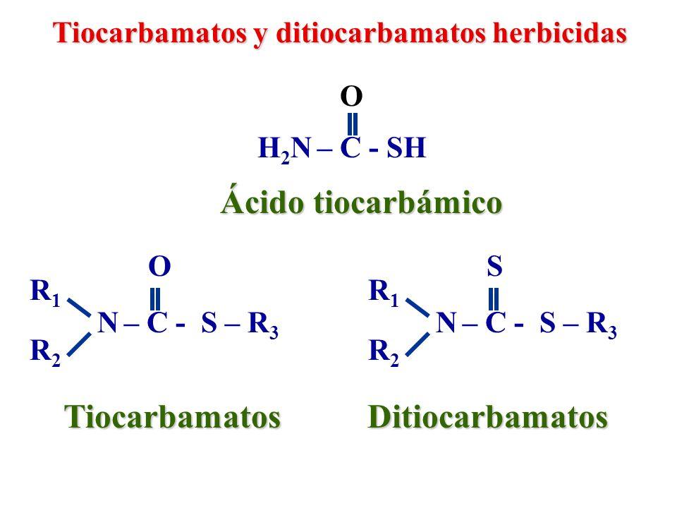 N – C - S – CH 2 - CH 3 O EPTC (Eptan) Tiocarbamatos y ditiocarbamatos herbicidas CH 3 - CH 2 - CH 2 N – C - S – CH 2 - CH 3 O Molinato CH 2 - CH 2 - CH 2 N,N-dipropil-tiocarbamato de S-etilo N-Hexen-tiocarbamato de S-etilo