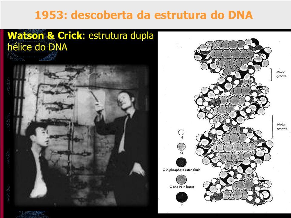 1953: descoberta da estrutura do DNA Watson & Crick: estrutura dupla hélice do DNA