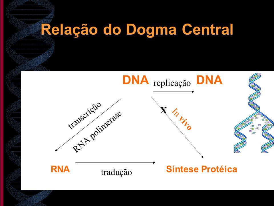 Relação do Dogma Central DNA DNA RNA Síntese Protéica X In vivo RNA polimerase transcrição tradução replicação