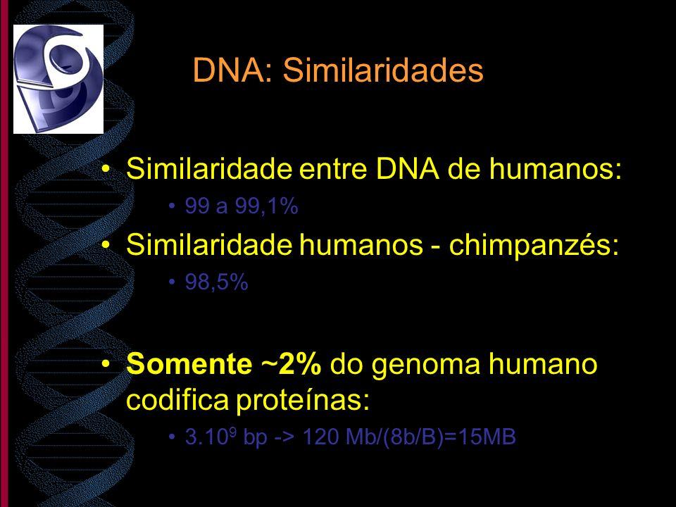 DNA: Similaridades Similaridade entre DNA de humanos: 99 a 99,1% Similaridade humanos - chimpanzés: 98,5% Somente ~2% do genoma humano codifica proteí
