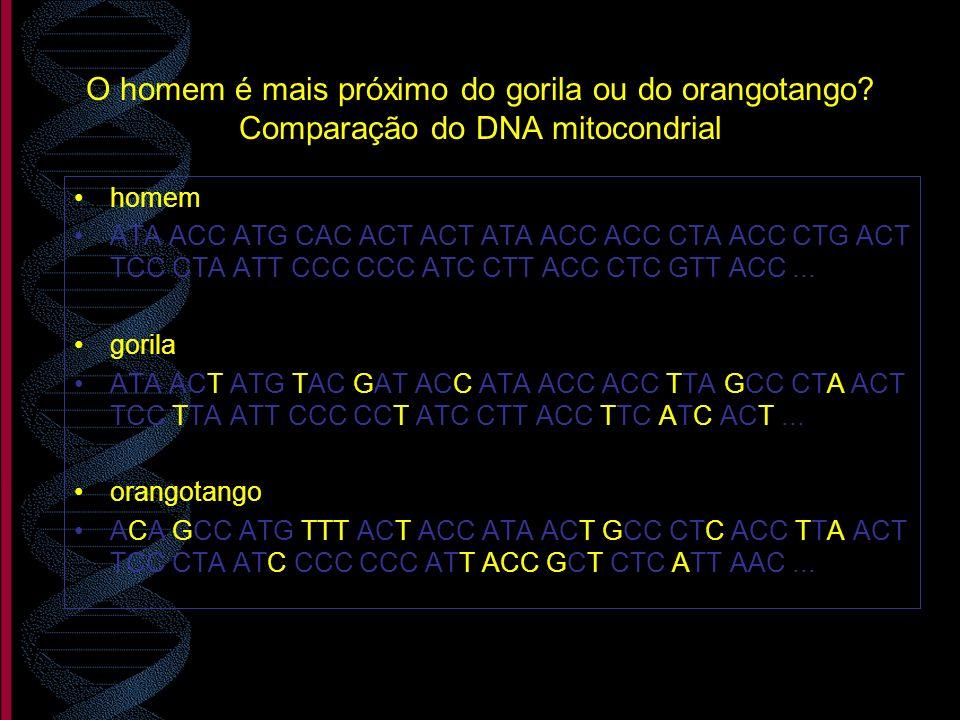 O homem é mais próximo do gorila ou do orangotango? Comparação do DNA mitocondrial homem ATA ACC ATG CAC ACT ACT ATA ACC ACC CTA ACC CTG ACT TCC CTA A