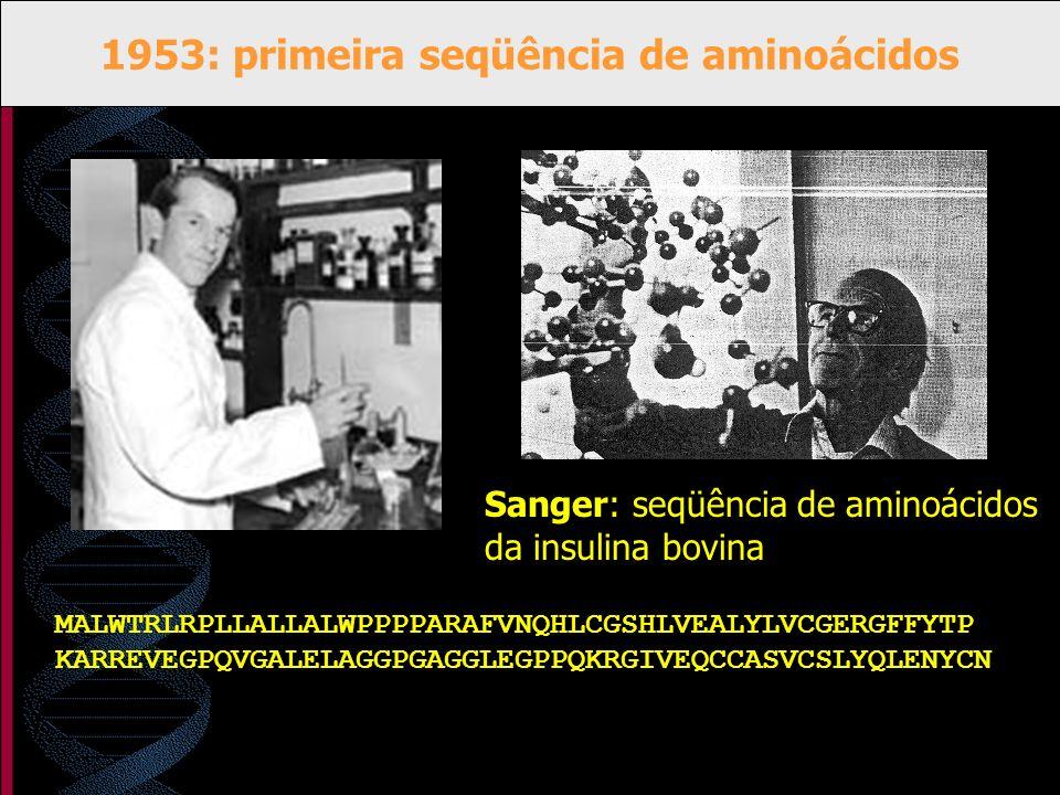 1953: primeira seqüência de aminoácidos MALWTRLRPLLALLALWPPPPARAFVNQHLCGSHLVEALYLVCGERGFFYTP KARREVEGPQVGALELAGGPGAGGLEGPPQKRGIVEQCCASVCSLYQLENYCN San