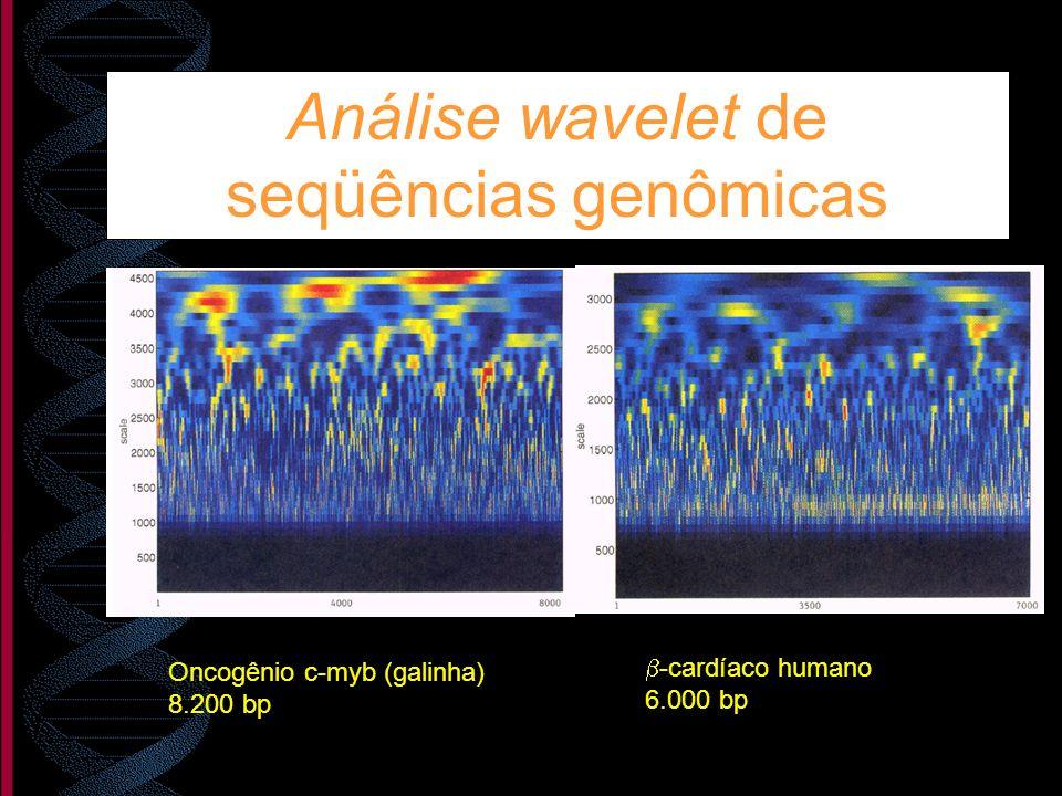 Análise wavelet de seqüências genômicas -cardíaco humano 6.000 bp Oncogênio c-myb (galinha) 8.200 bp