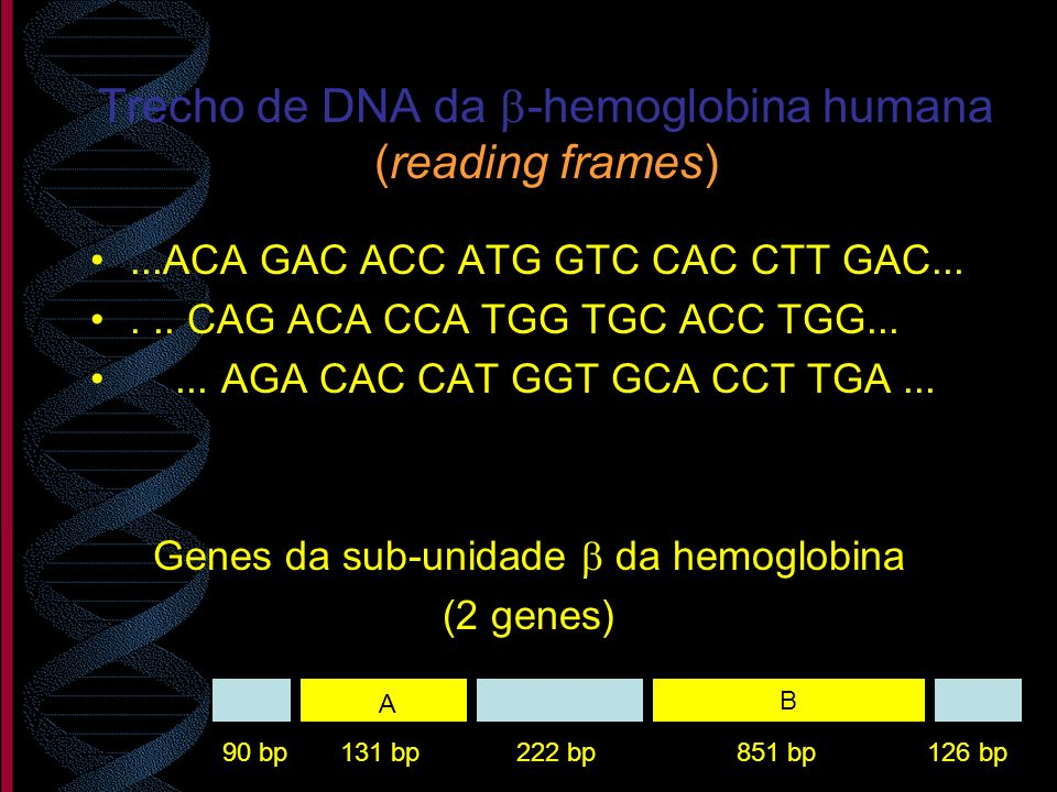 Trecho de DNA da -hemoglobina humana (reading frames)...ACA GAC ACC ATG GTC CAC CTT GAC...... CAG ACA CCA TGG TGC ACC TGG...... AGA CAC CAT GGT GCA CC