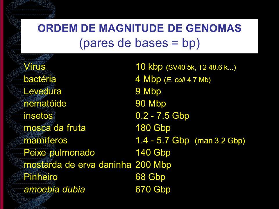 ORDEM DE MAGNITUDE DE GENOMAS (pares de bases = bp) Vírus10 kbp (SV40 5k, T2 48.6 k...) bactéria4 Mbp (E. coli 4.7 Mb) Levedura9 Mbp nematóide 90 Mbp