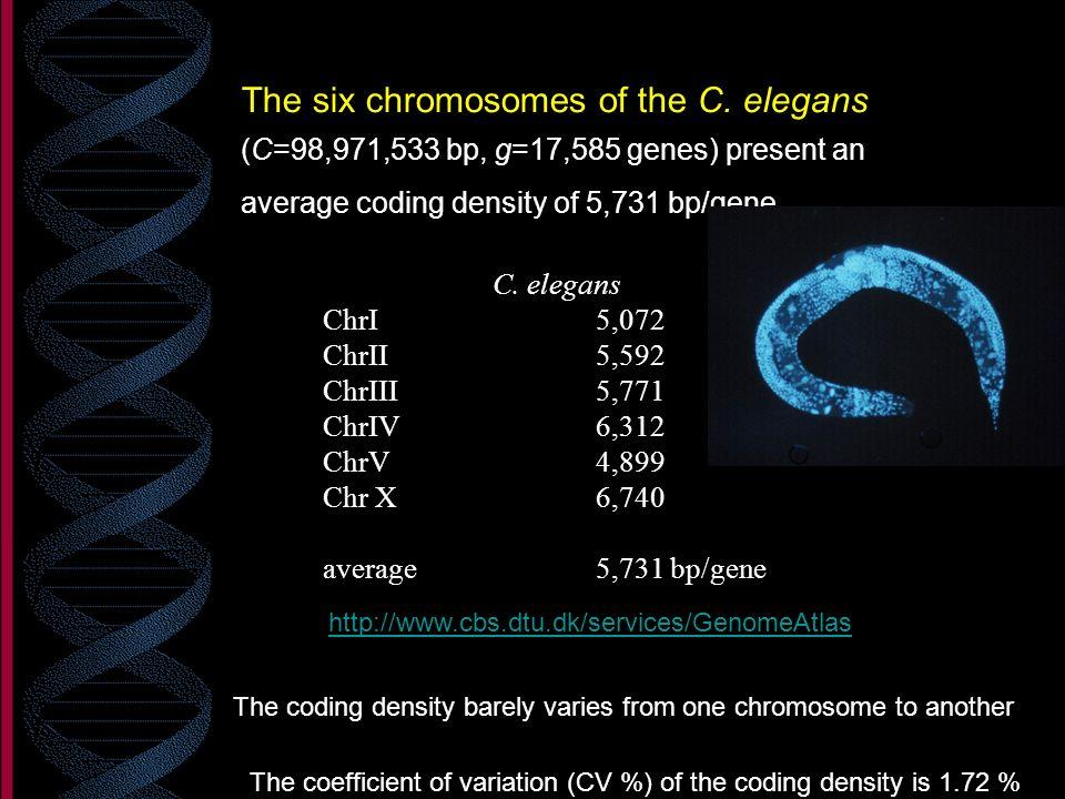 The six chromosomes of the C. elegans (C=98,971,533 bp, g=17,585 genes) present an average coding density of 5,731 bp/gene. C. elegans ChrI5,072 ChrII