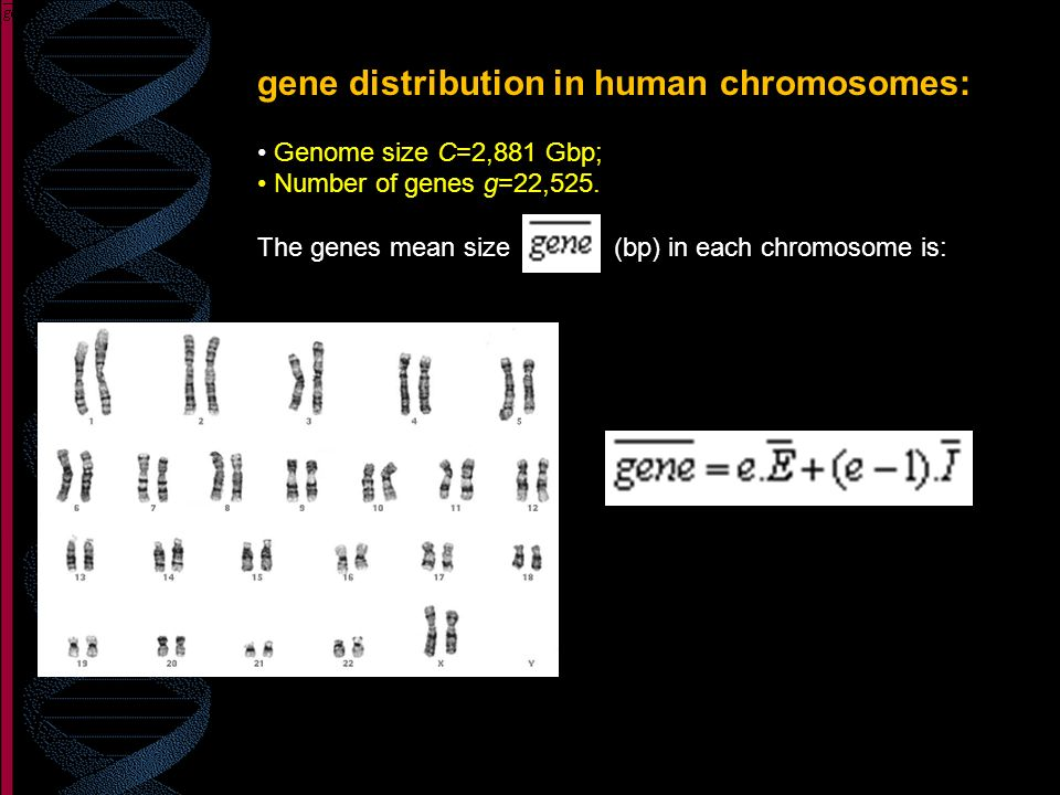 gene distribution in human chromosomes: Genome size C=2,881 Gbp; Number of genes g=22,525. The genes mean size (bp) in each chromosome is: