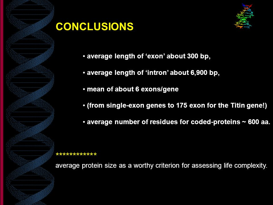 CONCLUSIONS average length of exon about 300 bp, average length of intron about 6,900 bp, mean of about 6 exons/gene (from single-exon genes to 175 ex