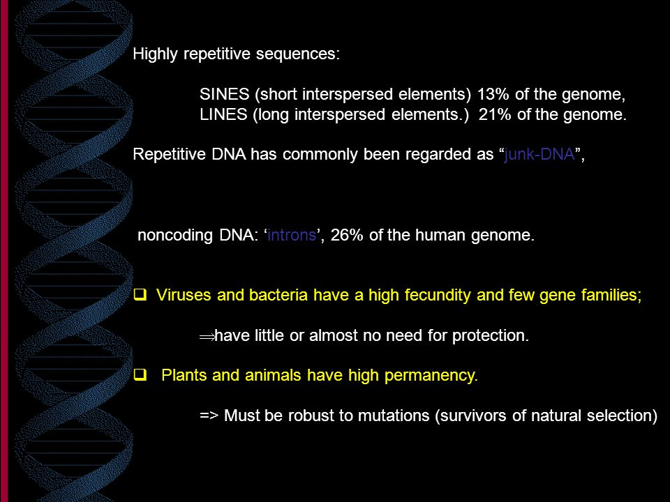 Highly repetitive sequences: SINES (short interspersed elements) 13% of the genome, LINES (long interspersed elements.) 21% of the genome. Repetitive