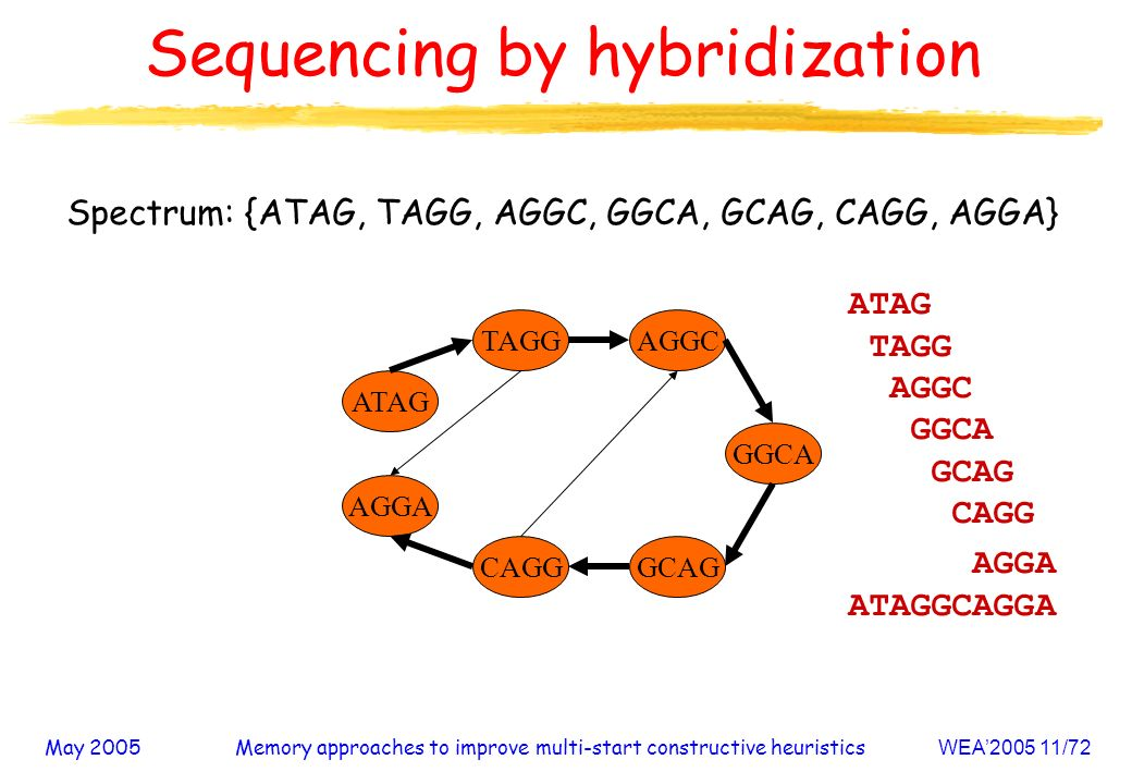 May 2005Memory approaches to improve multi-start constructive heuristicsWEA2005 11/72 Sequencing by hybridization Spectrum: {ATAG, TAGG, AGGC, GGCA, GCAG, CAGG, AGGA} AGGA CAGG AGGC GCAG ATAG GGCA TAGG ATAG TAGG AGGC GGCA GCAG CAGG AGGA ATAGGCAGGA