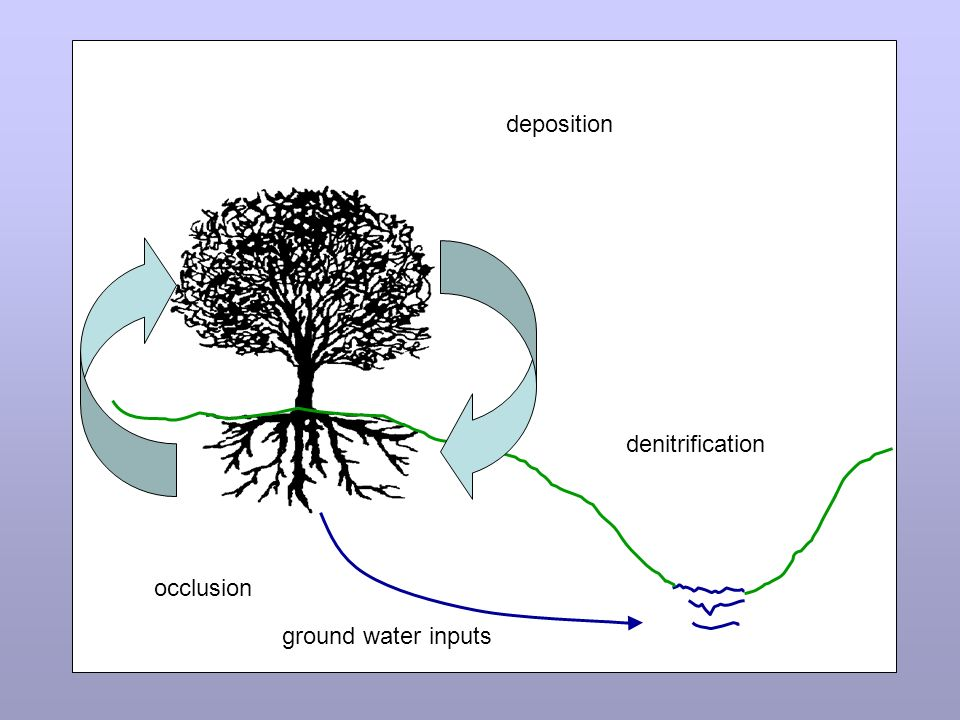 denitrification occlusion deposition ground water inputs