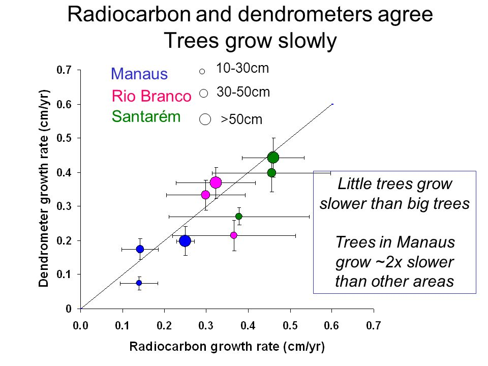 Radiocarbon and dendrometers agree Trees grow slowly 10-30cm 30-50cm >50cm Manaus Rio Branco Santarém Little trees grow slower than big trees Trees in Manaus grow ~2x slower than other areas